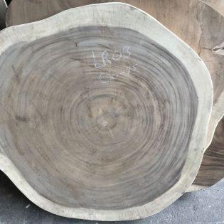 Suar boomstamblad rond LR03